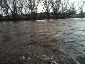 The Roiling, Boiling Upper Iowa River, Decorah, IA.  Copyright Diane Ludeking 2013