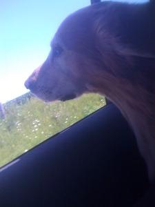 Dallas Riding in the Car